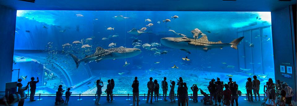 Okinawa Churaumi Aquarium I El Aquario De Okinawa Churaumi